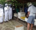 Sasamungga Bee Keepers Conference